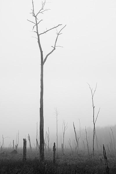 Bog 4<br /> ©2013 Peter Aldrich