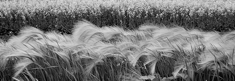 Whispering Grass<br /> ©2011 Peter Aldrich