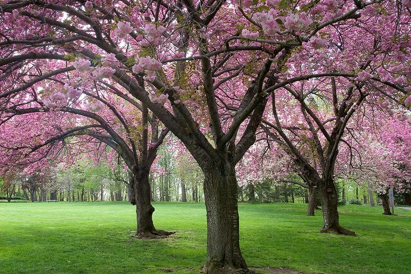 Arboretum Trees<br /> ©2005 Peter Aldrich