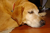 Mulder taking a nap.<br /> He was out first kid and a loyal companion for eleven years.  We loved him and miss him a lot.
