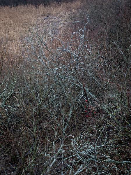Lenende trær / Leaning trees<br /> Linnesstranda, Lier 13.12.2020<br /> Canon 5D Mark IV + EF17-40mm f/4L USM @ 40 mm