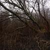Lenende trær / Leaning trees<br /> Linnesstranda, Lier 6.12.2020<br /> Canon 5D Mark IV + EF17-40mm f/4L USM