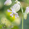Skogmarihand / Orchid<br /> Holtmesdalen, Asker 3.7.2021<br /> Canon EOS R5 + EF 100mm f/2.8L Macro IS USM