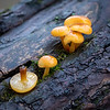 Gul sopp / Yellow mushrooom<br /> Linnesstranda, Lier 5.12.2020<br /> Canon 5D Mark IV + EF500mm f/4L IS II USM