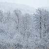 Trærne på øya etter snøfall<br /> Linnesstranda, Lier 1.1.2021<br /> Canon 5D Mark IV + EF500mm f/4L IS II USM