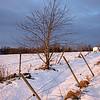 Bjørk / Birch<br /> Kovestad, Lier 6.2.2021<br /> Canon EOS R5 + RF24-105mm F4 L IS USM