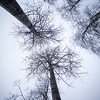 Trær mot himmelen<br /> Damtjern, 6.12.2020<br /> Canon 5D Mark IV + EF17-40mm f/4L USM @ 19 mm