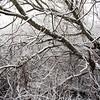 Krattskog vinter<br /> Linnesstranda, Lier 1.1.2021<br /> Canon 5D Mark IV + EF17-40mm f/4L USM @ 20 mm
