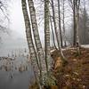 Trær ved bredden av Damtjern<br /> Damtjern, 6.12.2020<br /> Canon 5D Mark IV + EF17-40mm f/4L USM @ 17 mm