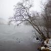 Trær ved bredden av Damtjern<br /> Damtjern, 6.12.2020<br /> Canon 5D Mark IV + EF17-40mm f/4L USM @ 24 mm