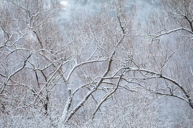 Trær holder hender / Trees holding hands<br /> Linnesstranda, Lier 1.1.2021<br /> Canon 5D Mark IV + EF500mm f/4L IS II USM