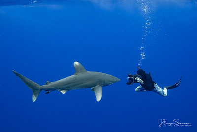 Ron & the Oceanic White Tip