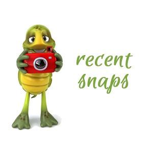 Recent Snaps