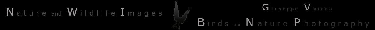 Banner-BN