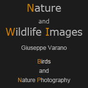 Giuseppe Varano - Nature and Wildlife Images