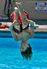 Flipped: Brennan Lund, 12, of Buena Park does a flip during his swim lesson at William Peak Park in Buena Park, where temperatures were in the mid-90s.