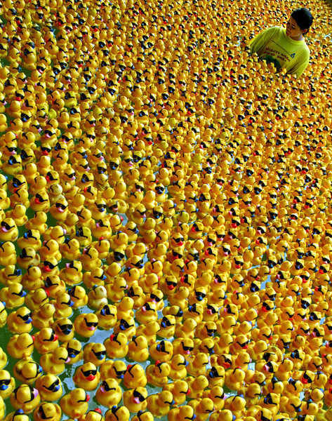 Volunteer, Courtney Ingram of Huntington Beach walks with over 15,000 rubber ducks to make sure they all make their way down the Wild Rivers Waterpark in Irvine. The ducks were part of the  annual Mighty Rubber Ducky Derby which raised money to help the Children's Bureau of Southern California.