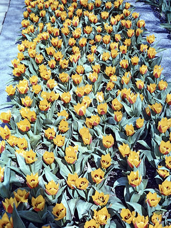 Slide box sec B 1-12 3m Plastic slides Dutch  flower market
