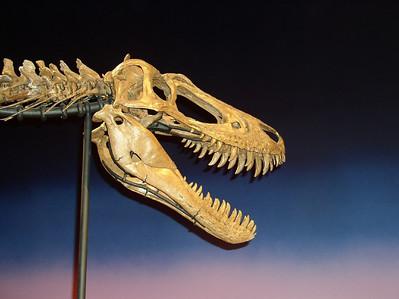 Jane, Rockford's famous dinosuar at the Burpee Museum