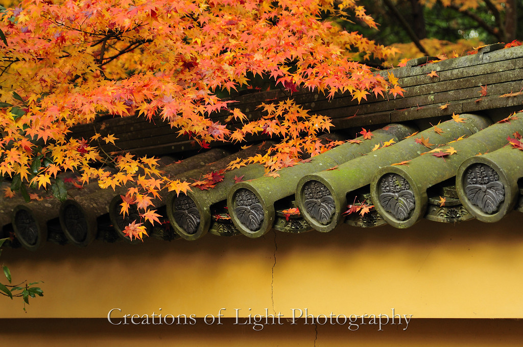 Kyoto in Fall Color