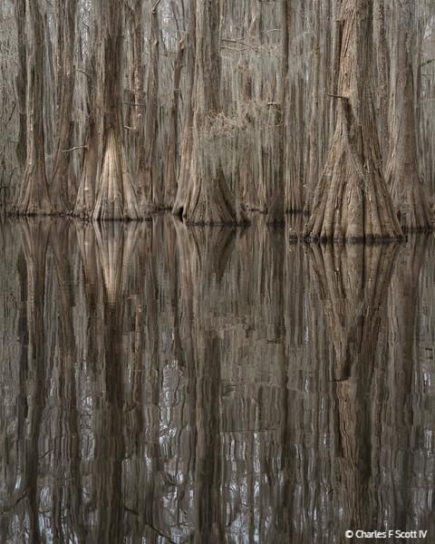 Reflected Trunks