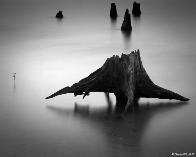 Levitating Stump