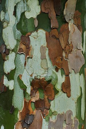 """30-09-2009<br /> <br /> """"Piel de plátano"""" - La corteza de los plátanos, con sus formas, colores y tonalidades, siempre me ha atraido como motivo fotográfico. De hecho, como tengo un plátano en el jardín, ya le he hecho unos cuantos """"retratos"""". Desde el día 3 de septiembre tenía uno de ellos seleccionado com 'sopita', pero esta mañana ha llovido y al mojarse parte del troco algunos colores se han saturado y he vuelto a hacer una foto más, esta que os presento.<br /> <br /> """"Banana skin"""" - First let me explain the title. In Spain we use 'Platano' as the name for both banana trees and sycamores. The sycamores bark, with its shapes, colours and tones, has always been for me an attractive object to photograph. As a matter of fact, as I have a sycamore in my garden, I have already taken a number of """"portraits"""" of it. Since Sep. 3rd I had one of them ready to be used as a 'daily soup', but we had some rain this morning and, as the trunk got partially wet, some colours have saturated and I decided to take yet another picture, the one I post here."""