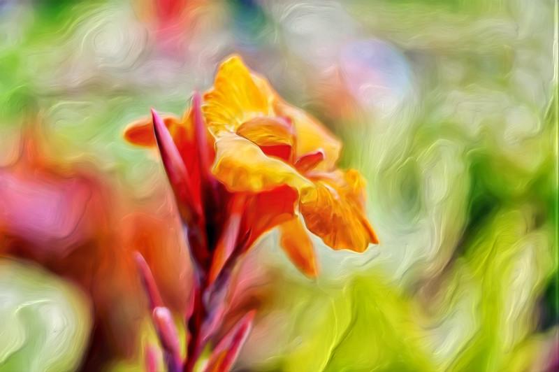 """""""Orange Painted Bloom"""""""