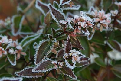 Anoche hizo mucho frio - It was very cold last night