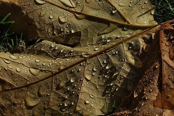 "28-09-2009<br /> <br /> ""Primeras gotas de este otoño""<br /> <br /> ""First raindrops this Autumn"""