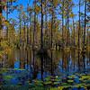 Cypress Gardens_-4