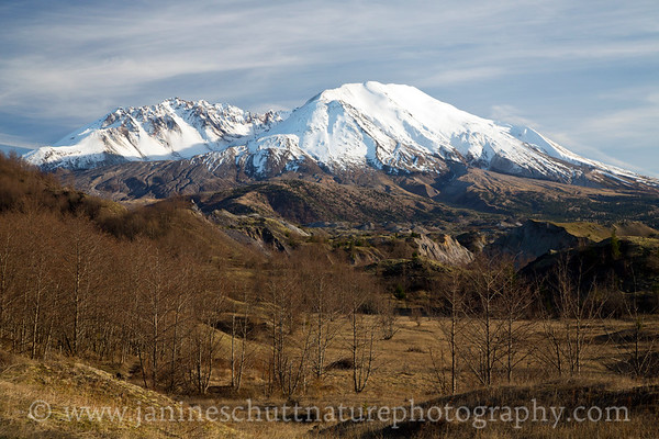 View of Mt. St. Helens from the BoundaryTrail on a warm February day.