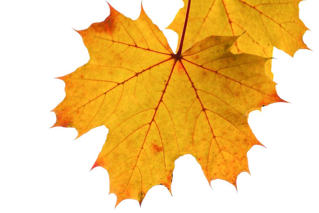 Leading the Fall