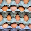 Cartons of eggs, Taunton, England