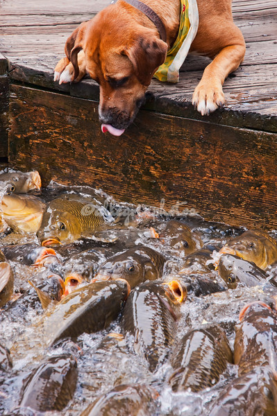 Dog and Fish, Smith Mountain Lake, Virginia