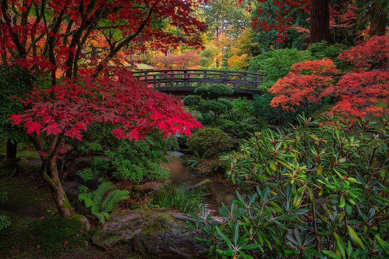Autumn Moon Bridge