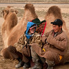 Mongolian herders and camel