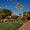 Rose Petals, Yountville, California