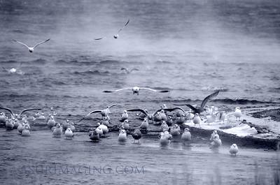 Gulls at the Bubbler