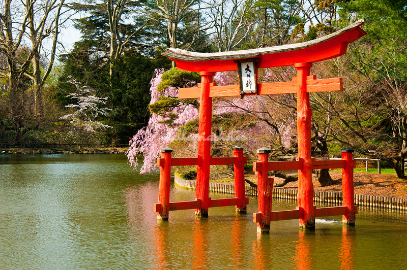 Japanese garden Brooklyn Botanical Garden