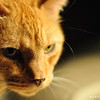 Cats_0002