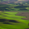 Lone Tree Steptoe Butte copy website