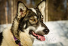 20130227AlaskaIditarodTrip__MG_0680_1352