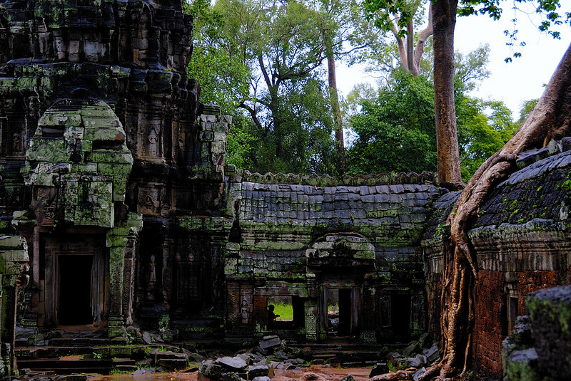 TaProhm tower and roots
