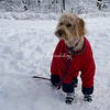 Dog, Central Park, New York