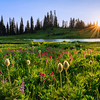 Tipsoo Lake Sunstar Revised website