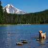Frog Lake with Mount Hood, Oregon