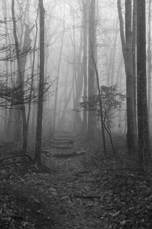 Nothing like thick fog to make a walk in the forest enchanting or haunting. You pick, but don't go by yourself!  This trail is located in Ceasers Head State park in South Carolina.
