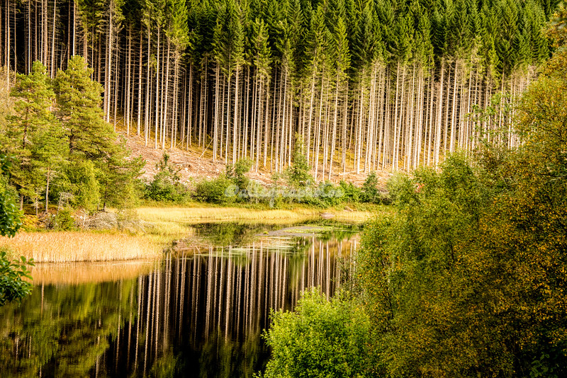 Forest reflections on the road to Trondheim