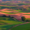 Checker Board Palouse website